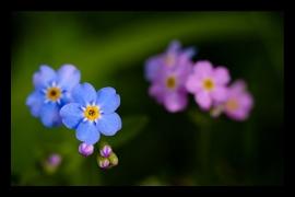 flora-i-fauna